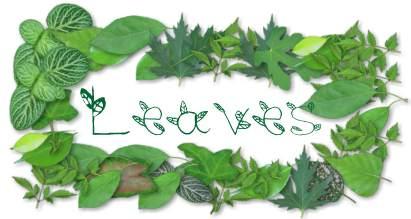 leaves font